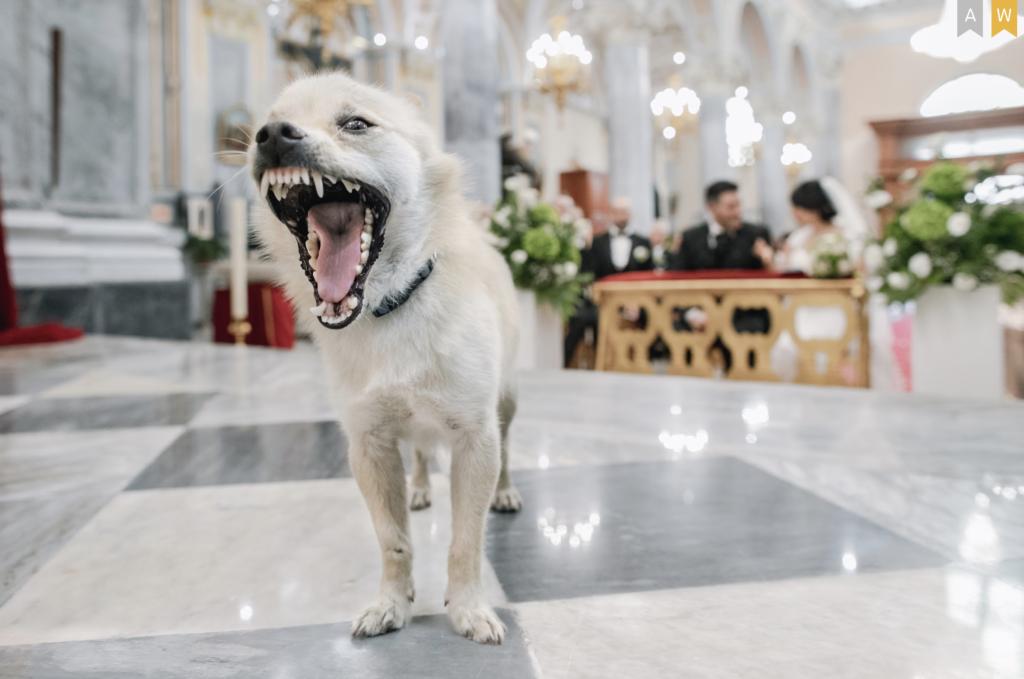 miglior fotografo per matrimoni a palermo